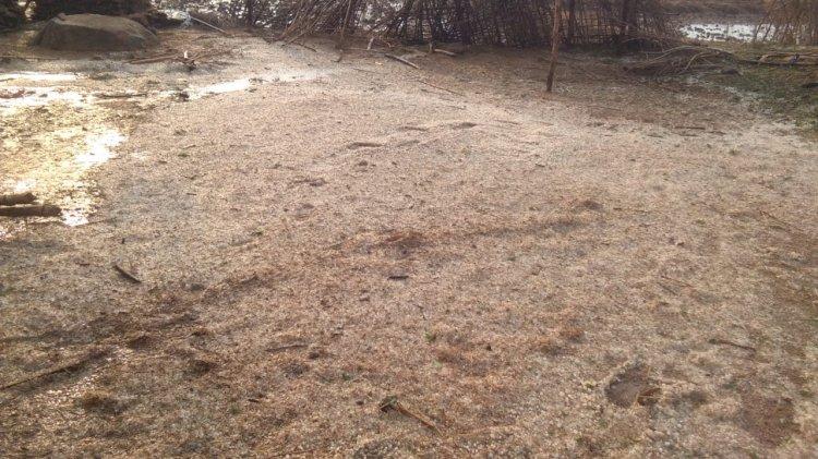 ग्रामीणो ने कहा पिछले 50वर्षों में नही देखी ऐसी भयानक ओलावृष्टि.वनांचल ग्राम में तेज हवा व बारिश के साथ हुई जमकर ओलावृष्टि...काश्मीर सा पूरे गाँव मे बिछ गई बर्फ की चादर बेहतरीन नजारा पर किसानों की पढ़िये खबर में