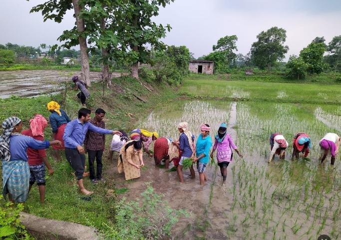 पथरिया एसडीएम प्रिया गोयल उतरी खेत पर किसानों के साथ  रोपा लगाते, जैविक खेती पर की चर्चा