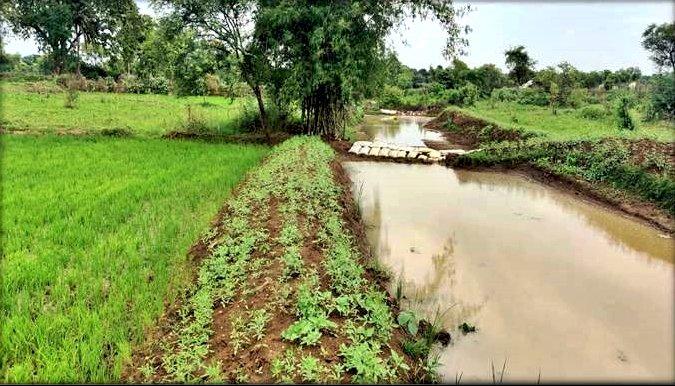 मान्यता नरवा विकास कार्य से ग्रामीणों को मिल रही सिंचाई की सुविधा, परसवानी नाला से 436 हेक्टेयर खेतों में हो रही सिचांई