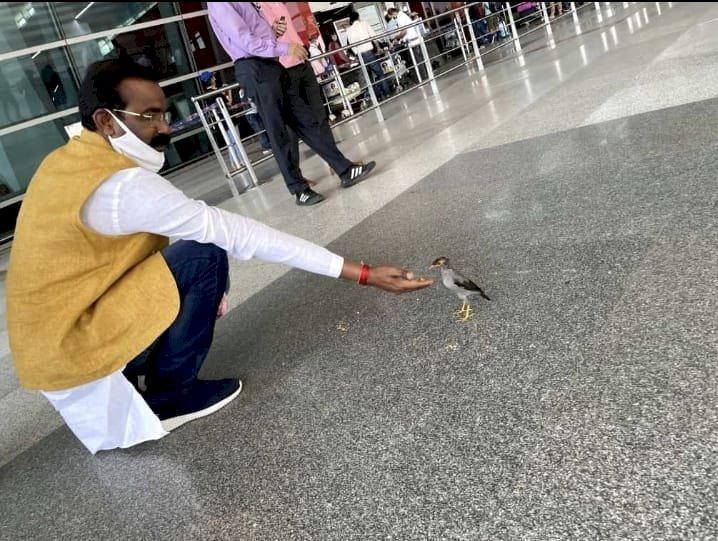 *इंसान ही नहीं, जो पशु-पक्षियों के भी दुःख समझे वही सच्चा जनप्रतिनिधि, एयरपोर्ट पर विधायक कुंवर रमली पक्षी को देख दाना खिलाने लगे*